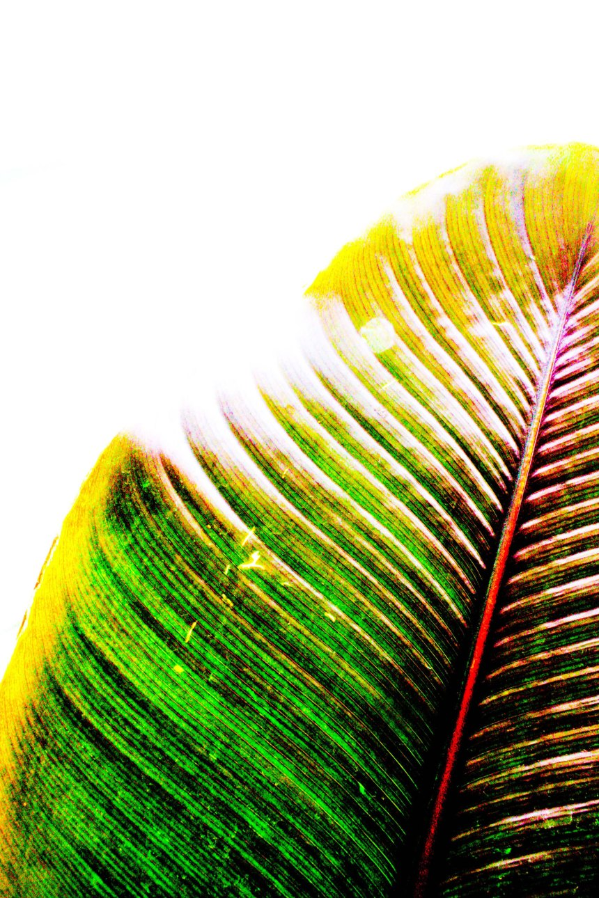 green leaf and sun