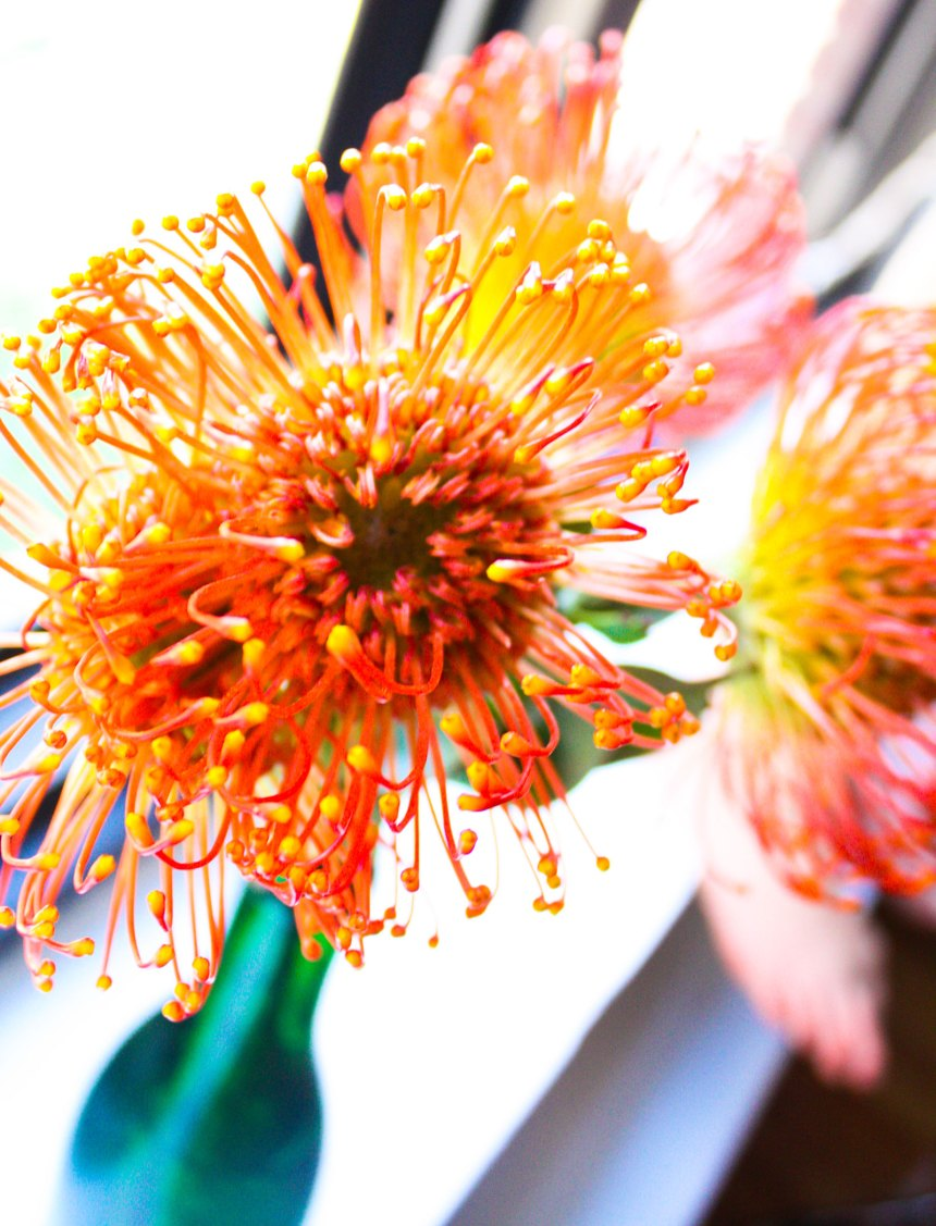 orange flower- alien