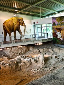Columbian mammoth bones in Texas