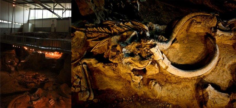 Columbian mammoth bones in Texas