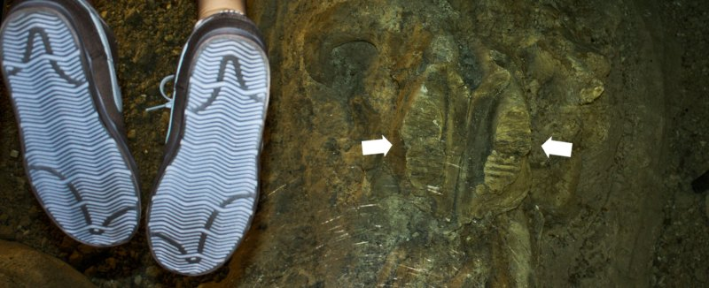 mammoth teeth and Nike soles
