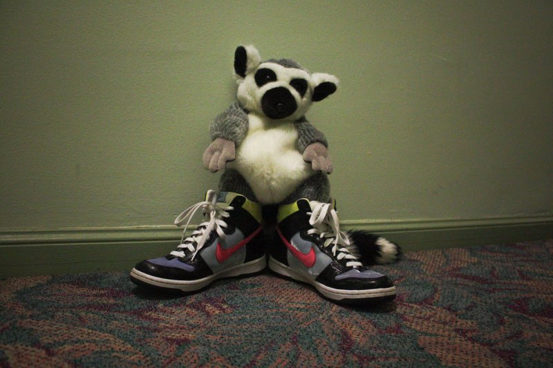 sneakers and lemurs