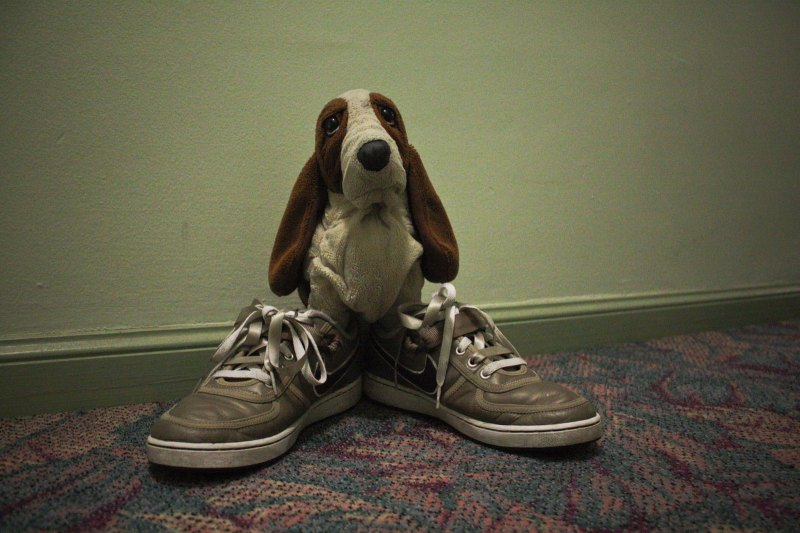 sneakers and stuffed animals