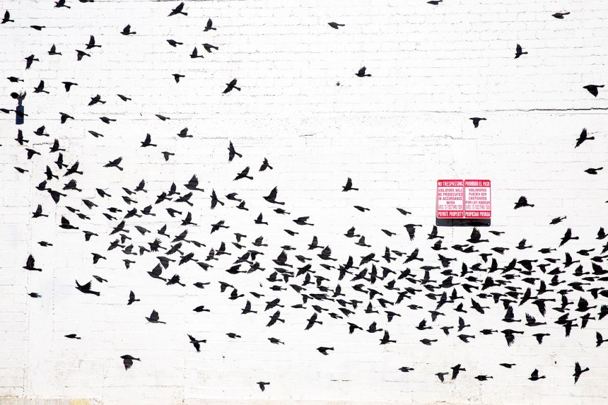 Street Art in Phoenix, Arizona / for the love of nike